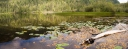 Megin Lake Lily Pano #2