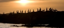 Cormorant Sunset Pano-2