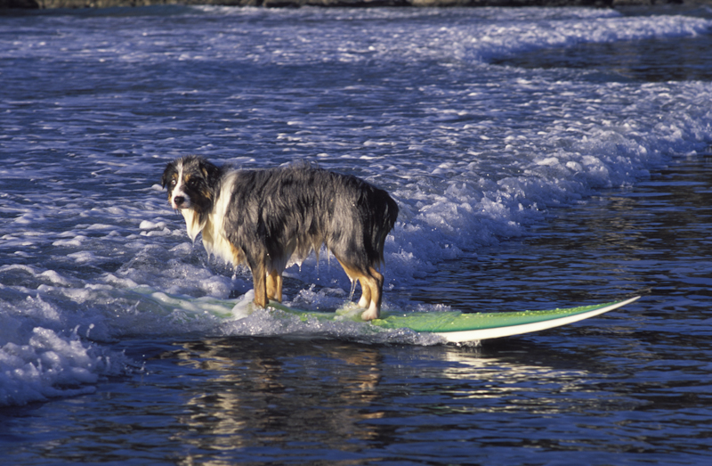 20040803-surf pooch