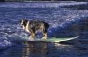 20130827-20040803-surf pooch-2