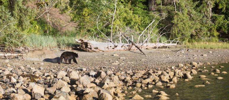 20140730-BEAR PANO,JULY 30TH,2014