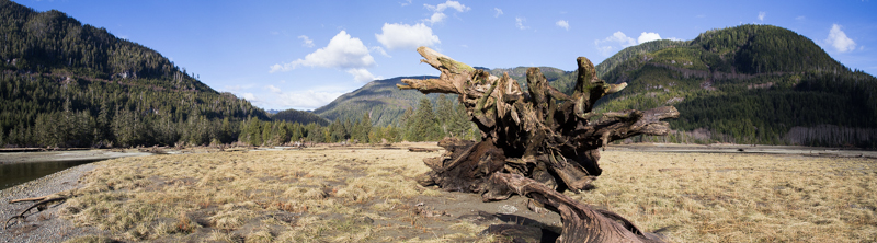 20150227-Tranquil Stump Pano