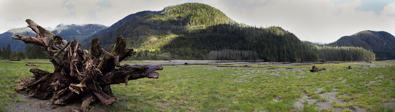 20150428-Tranquil Stump Pano